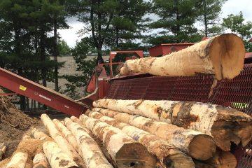 Barkless Firewood